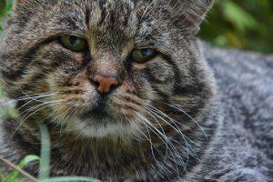 cat-2749849__340